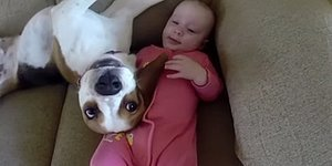 Proof That A Beagle Can Be The Best Babysitter Ever