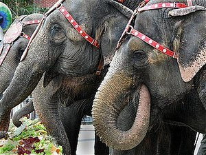 Ringling Bros. Is Dumping Its Iconic Elephants