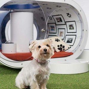 Samsung Built a $31K Doghouse!