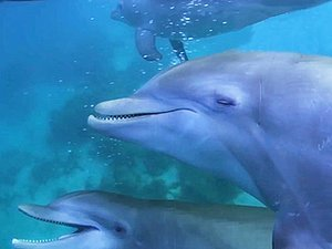 WATCH: Discovery Special Captures Dolphins Getting Stoned on Pufferfish Toxins