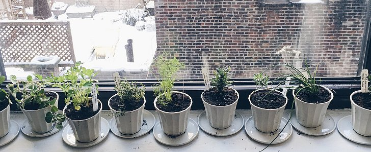 Calling All Herb-ivores! Here's How to Create a Windowsill Herb Garden