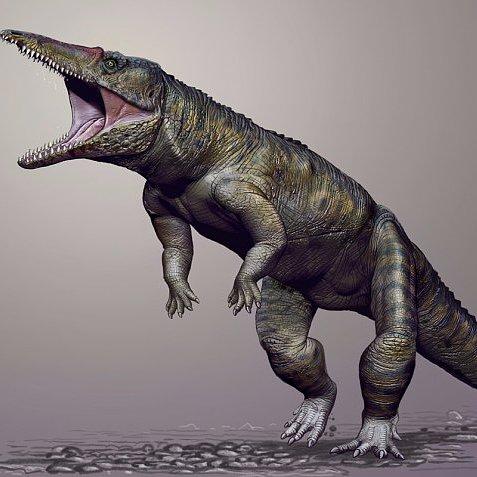 Carolina Butcher Crocodile From Triassic Period