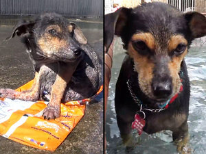 Abandoned Puppy With Severed Leg Refuses To Give Up, Learns To Run Again