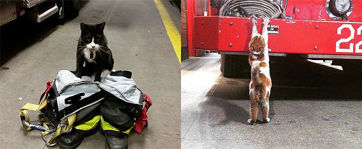 Meet the Adorable Firefighter Cats Taking Over Instagram