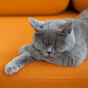 Are Your Cat's Feet Producing an Unusual Odor?