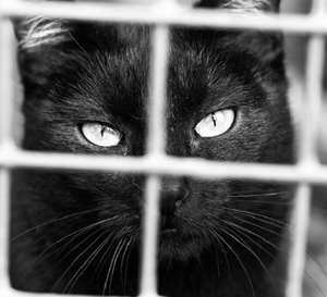Do Judgmental People Inhibit the Ultimate Goal of Cat Rescue?