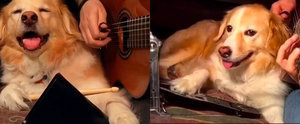 Here's Maple, the Instrument-Playing Dog Who Deserves a Record Deal