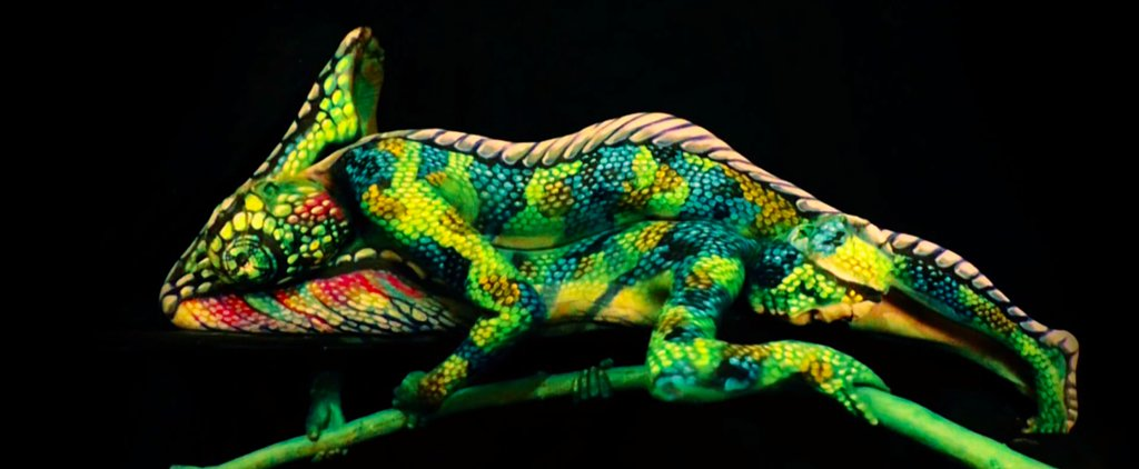 Think This Is a Chameleon? Look Again