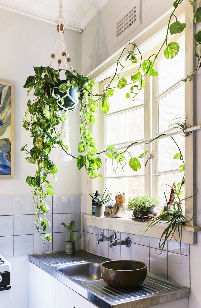 House plants in hanging pot kitchen