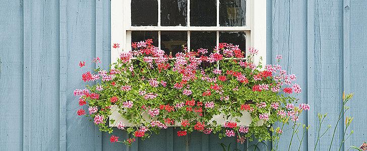 3 Easy Flower-Box Ideas