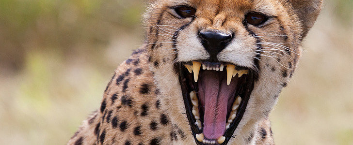 2-Year-Old Falls Into Cheetah Exhibit After Mom Dangles Him Over Rails
