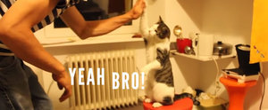 Bro Cats Are All About the High Fives and Fist Bumps