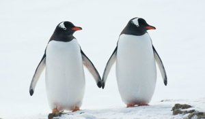 Boston Aquarium Is Setting Up Rooms For Penguins' Sexy Time