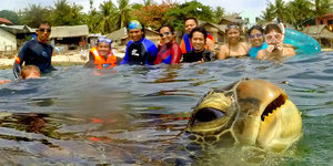 Sea Turtle Photobombs Vacation Picture