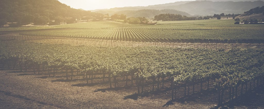 The Countries With the Most Vineyards May Surprise You