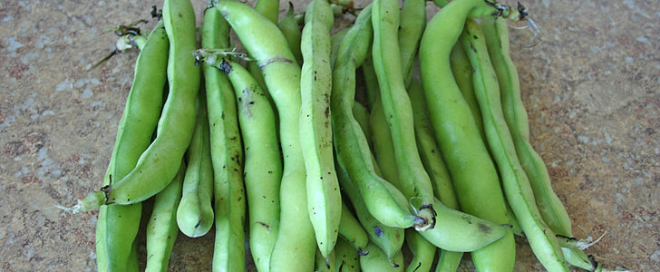 A Better Way to Peel Fava Beans