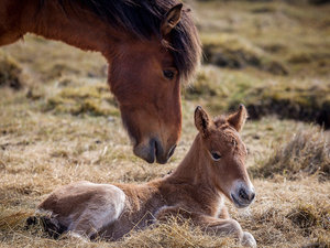 Grieving Horse Mom Finds Foster Foal via Facebook After Baby Dies