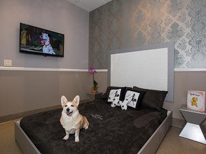 Four-Legged Guests Vacation In Style at Florida's Posh Pet Hotel (PHOTOS)