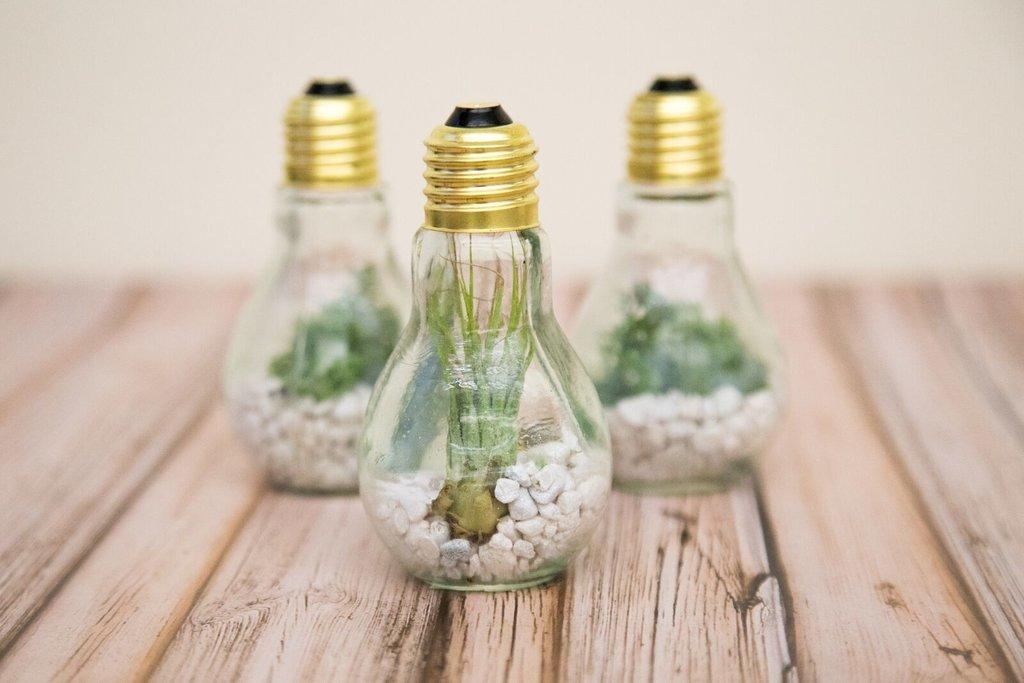 Easy DIY Lightbulb Terrarium   POPSUGAR Home