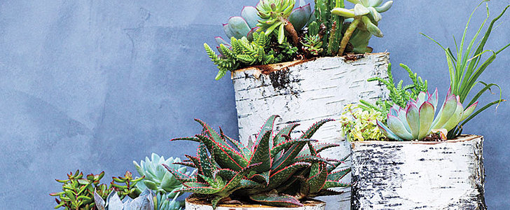 How to Create a Succulent Centerpiece