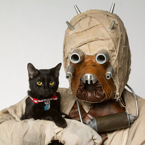Star Wars Characters Help a Shelter in Canada Find Permanent Homes for Cats