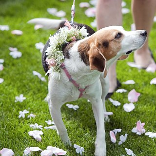 Wedding Tips For Dogs