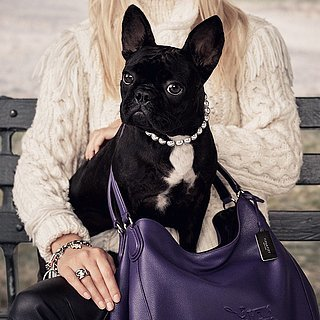 Lady Gaga's Dog Asia Kinney in Coach Ad