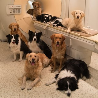 Brain Scans Reveal What Dogs Think of Us