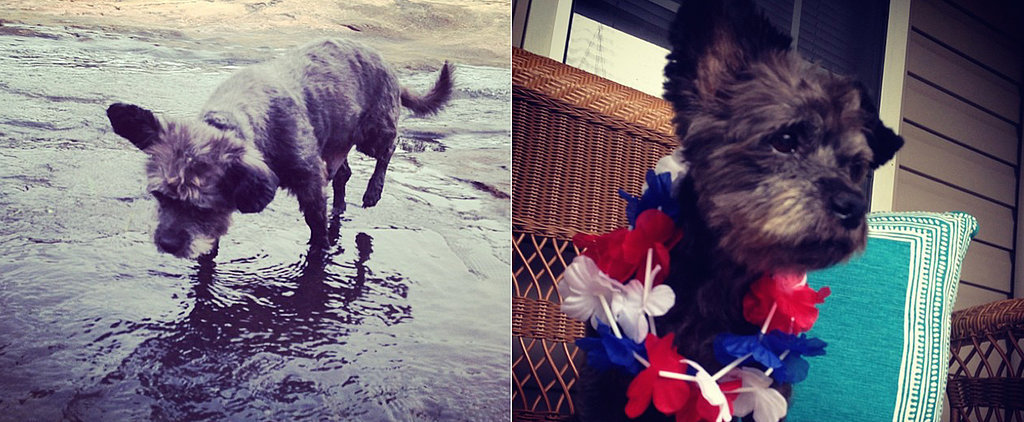 This Dying Dog's Rescue Story Will Definitely Make You Tear Up