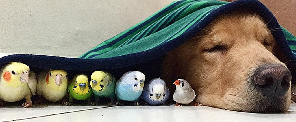 This Dog Has Some Odd BFFs — Birds and a Hamster!