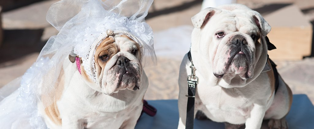 The Dog Wedding Movie Gets Theatrical Release