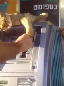 Thrifty Cat Guards the ATM, Swipes at Man Trying to Take Out Money (VIDEO)