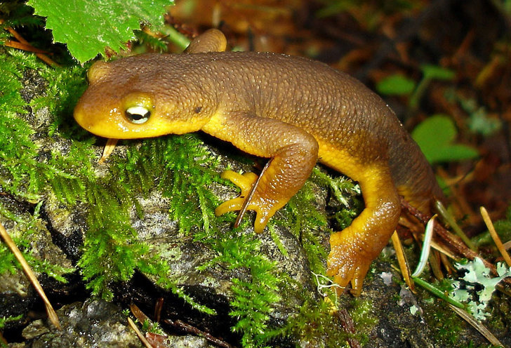 Cute Newt Knew Cutest Exotic Pets