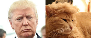 The Hilarious #TrumpYourCat Felines That Are Taking Over the Internet