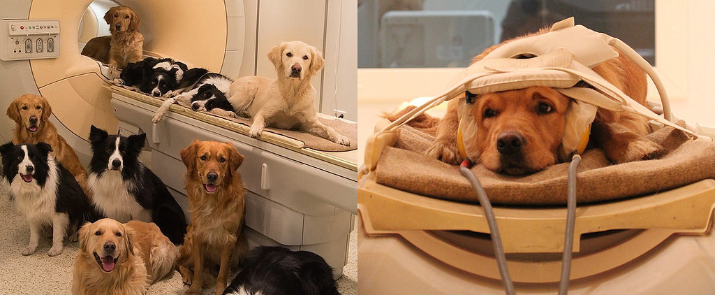Brain Scans Reveal What Dogs Really Think of Us