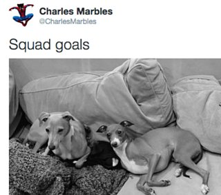 Funny Animal Tweets
