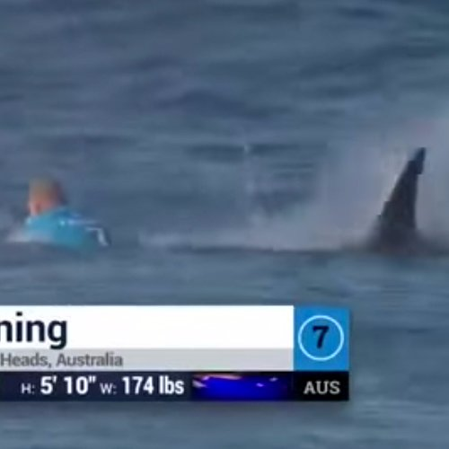 Shark Attack During Surfing Competition | Video