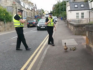 Police Officers Escort Quacking Duck Family Across the Street (VIDEO)