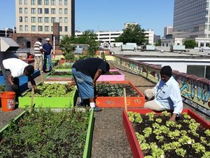 Homeless People In Atlanta Plant Organic Garden, Provide Food For Shelter Residents
