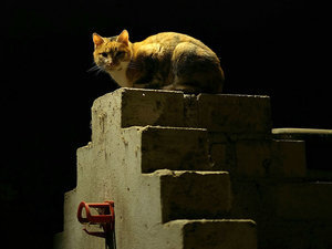 Grounded: Australia to Give Cats a 24-Hour Curfew