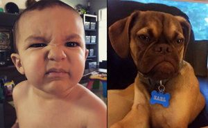 5 Times Your Baby Was Grumpier Than Earl The Grumpy Puppy