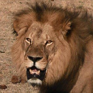 Cecil the Lion's Murder Reveals a Drastic Need for Change