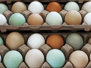 Are Farmers Market Eggs Really Worth It, And Do They Taste Better?