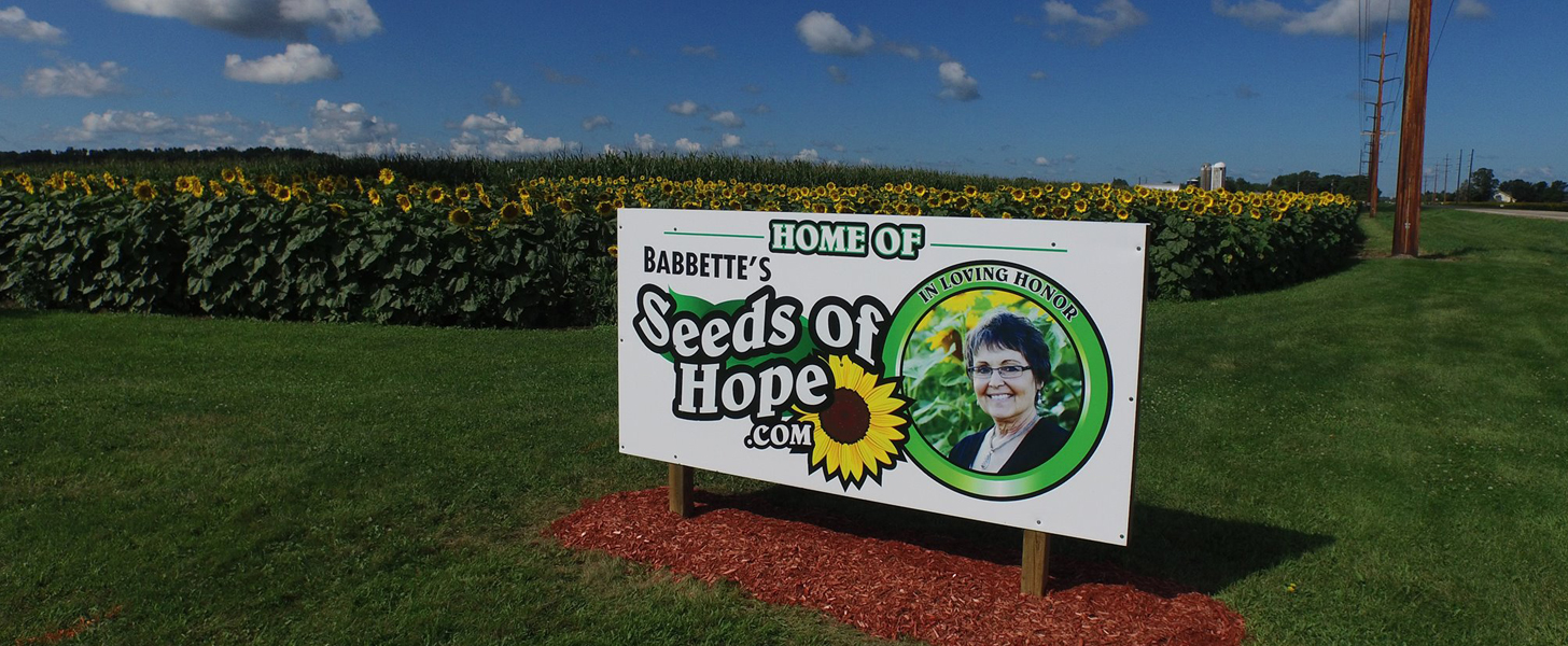 Husband Planted 4-Mile Stretch of Sunflowers For Wife Who Died of Cancer