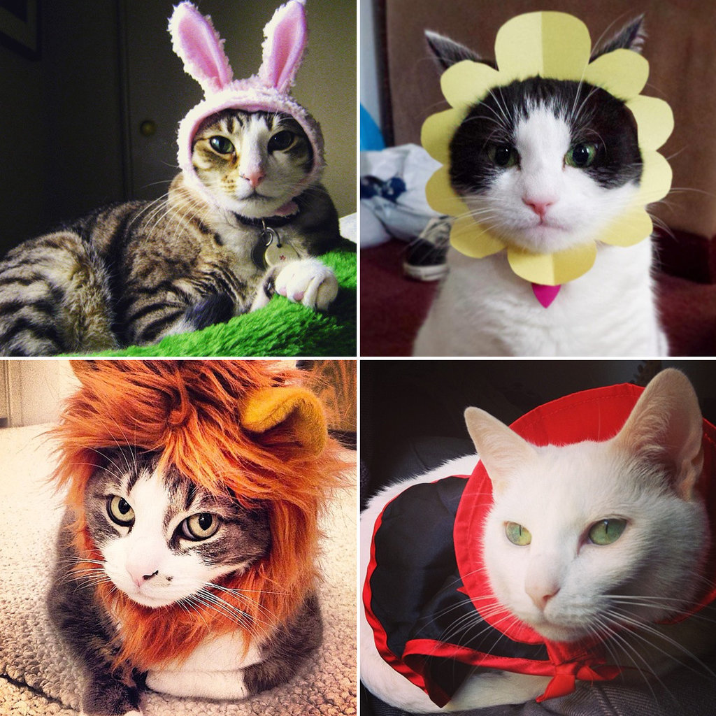 DIY Cat Costumes | POPSUGAR Smart Living