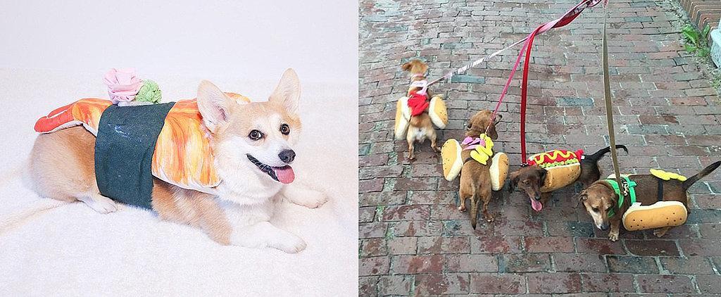 25 LOL-Worthy Dogs Dressed as Food