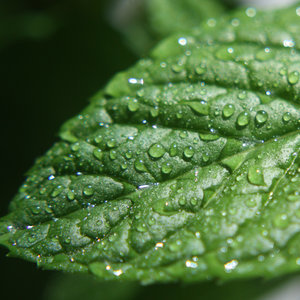 Uses For Peppermint Oil