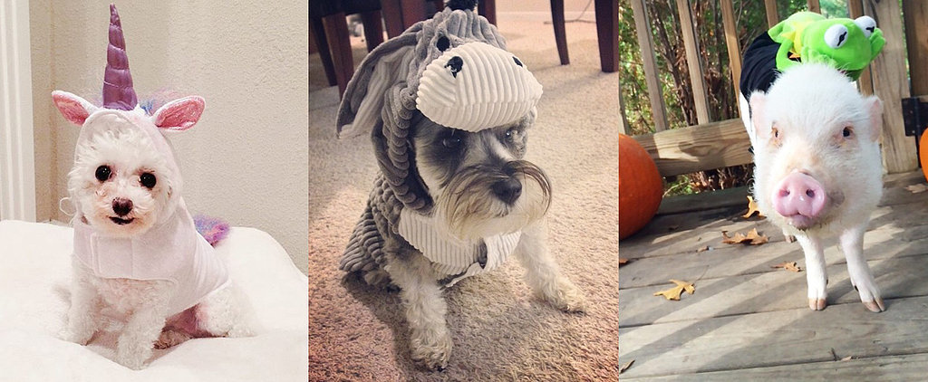 65 Pet Costumes to DIY on the Cheap