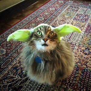 DIY Pet Costume Ideas