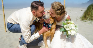 Bride Brings Dying Dog To The Ocean For The Very First Time On Her Wedding Day